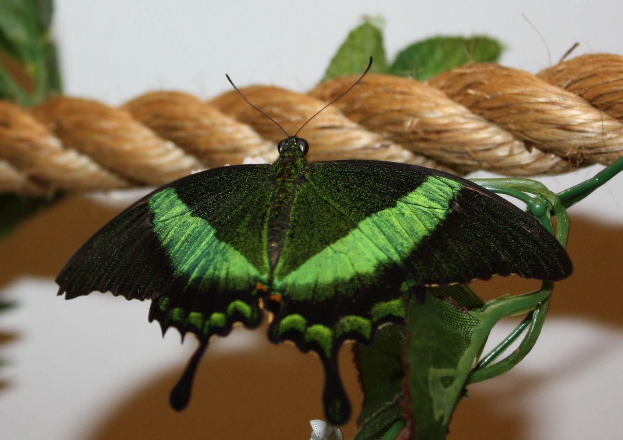Как разведение бабочек в домашних условиях как бизнес